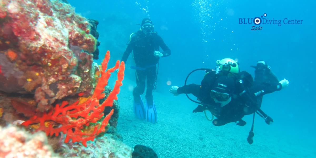 Diving split blu diving center split - Dive center blu ...
